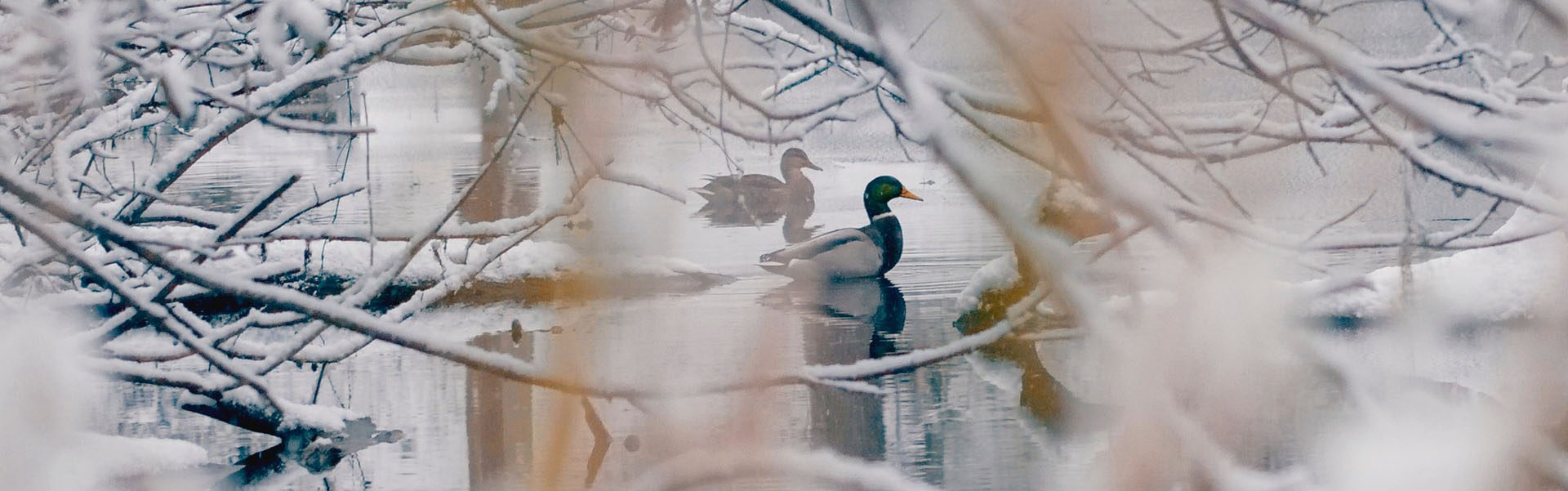 http://kingdomgames.co/memphremagog-winter-swimming-society/